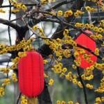 Red_Lanterns